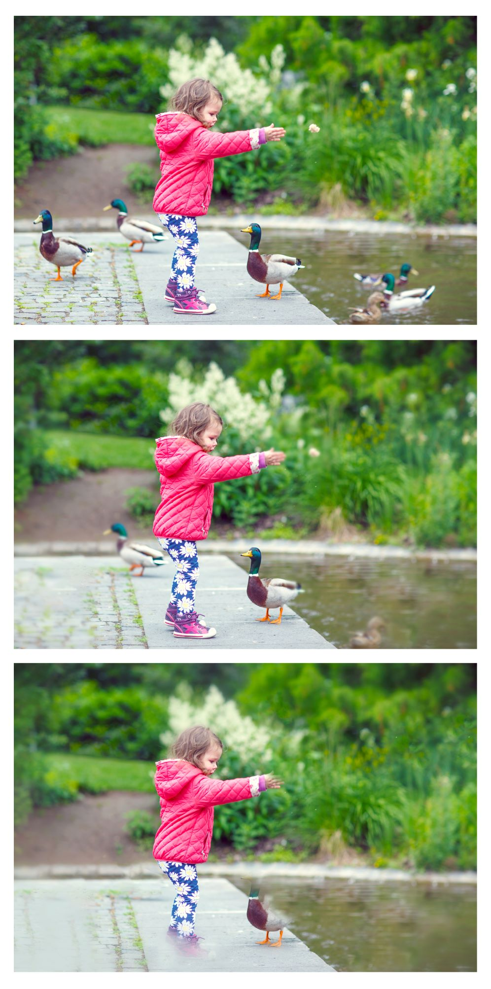 Image shows 3 versions of same photo simulating the reduced detail people with Glaucoma would see. The first image shows a young child feeding 5 ducks. In the 2nd image there is less detail in the periphery so that only 3 ducks are in sight and the final image there is just one duck in the central vision.